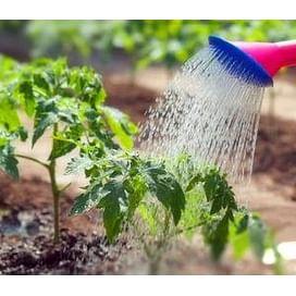 Система защиты томатов от imarket Агро