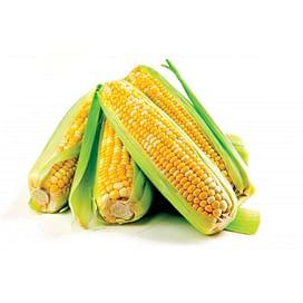 Система защиты кукурузы от imarket Агро