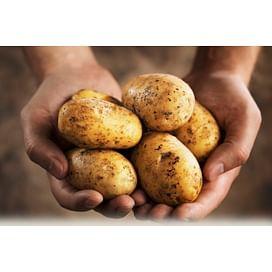 Система защиты картофеля от imarket Агро
