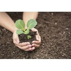 Система защиты белокочанной капусты от imarket Агро