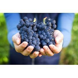Система защиты винограда от imarket Агро