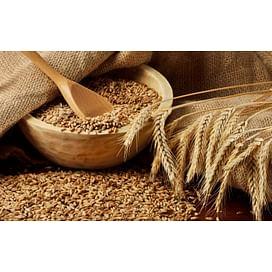 Система защиты пшеницы от imarket Агро