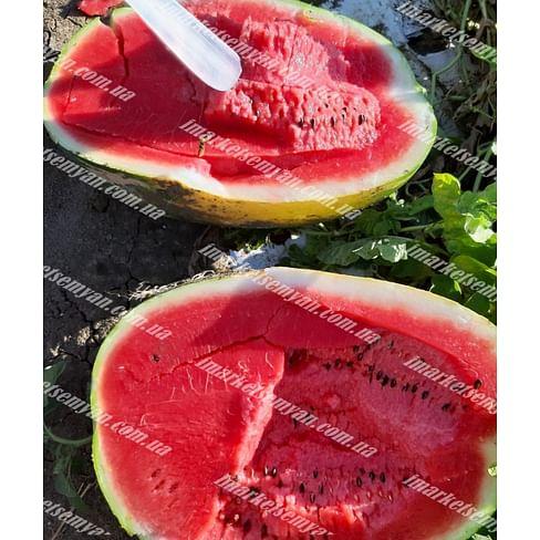 Фонтана F1 семена арбуза тип Кримсон Свит раннего 1 000 семян LibraSeeds