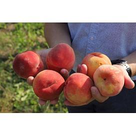 Система защиты персика от imarket Агро