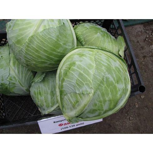 Файтер F1 семена капусты белокочанной 1 000 семян Sakata/Саката