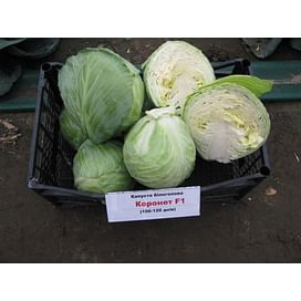 Коронет F1 семена капусты белокочанной 1 000 семян Sakata/Саката