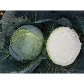 Центурион F1 семена капусты белокочанной Clause/Клоз
