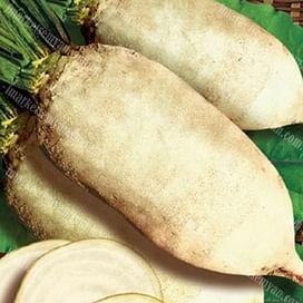 Центаур Поли семена свеклы кормовой белой