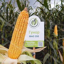 Гунор семена кукурузы 1 мешок Химагромаркетинг