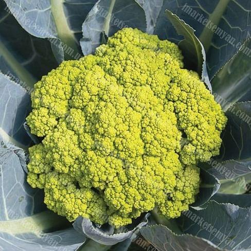 Грин Сторм F1 семена капусты цветной средней Syngenta/Сингента