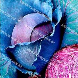 Редкеб семена капусты краснокочанной среднепоздней Semenaoptom/Семенаоптом