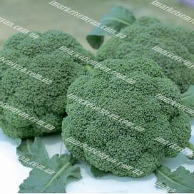 Баро Стар F1 семена капусты брокколи ранней NongWoo Bio