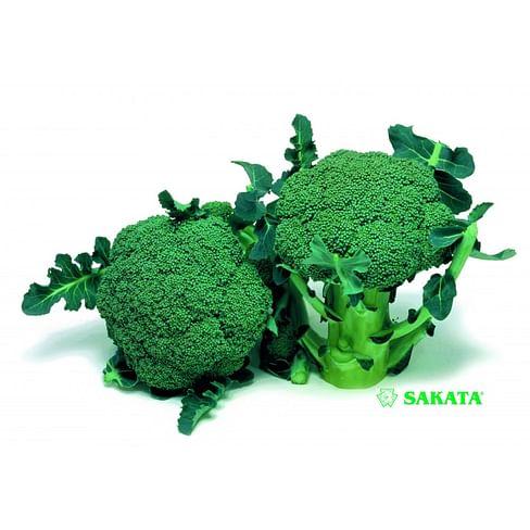 Маратон F1 семена капусты брокколи 1000 семян Sakata/Саката