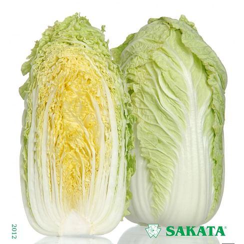 Ричи F1 семена пекинской капусты 1 000 семян Sakata/Саката