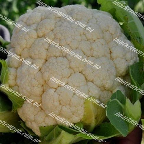 Борис F1 семена капусты цветной средней 1 000 семян Vilmorin/Вилморин