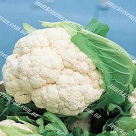 Бодилис F1 семена капусты цветной средней 1 000 семян Vilmorin/Вилморин