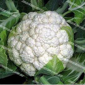 Феррара F1 семена капусты цветной ранней 2 500 семян Hazera