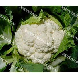 Сеул F1 семена капусты цветной средней 2 500 семян Hazera