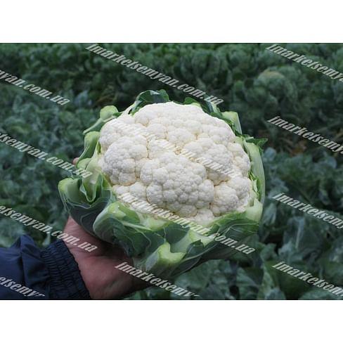 Фарго F1 семена капусты цветной средней 2 500 семян Bejo/Бейо