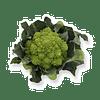 Пунтоверде F1 семена капусты цветной Rijk Zwaan/Рийк Цваан