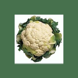 Стабилис F1 семена капусты цветной среднеранней Rijk Zwaan/Рийк Цваан