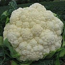 Кердос F1 (Kerdous F1) семена капусты цветной 1 000 семян Seminis/Семинис