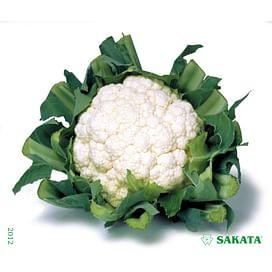 Кашмир F1 семена цветной капусты 1 000 семян Sakata/Саката