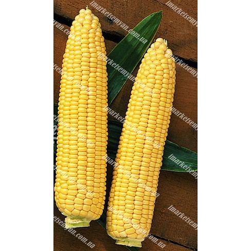 Сентинель F1 семена кукурузы сладкой ранней 5 000 семян Clause/Клоз