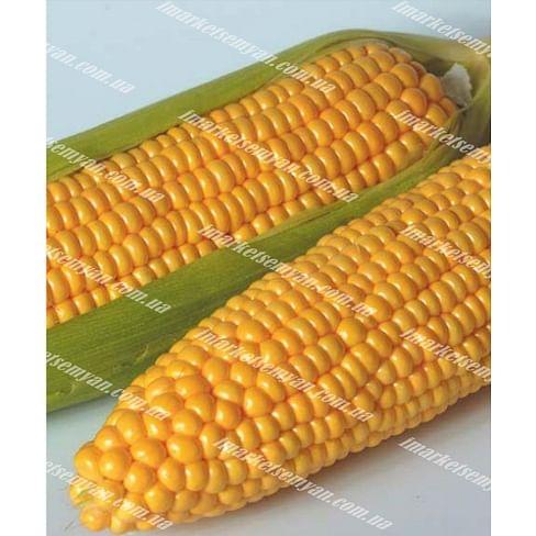 Тусон F1 (Тайсон F1) семена кукурузы суперсладкой 100 000 семян Syngenta/Сингента