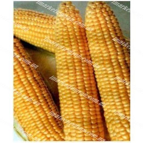 Димакс F1 семена кукурузы сладкой ранней May Seeds