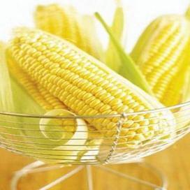 Вондерленд F1 семена кукурузы суперсладкой поздней 5 000 семян Agri Saaten
