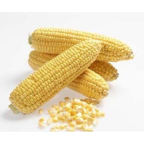 Свит Наггет F1 семена кукурузы суперсладкой ранней Agri Saaten