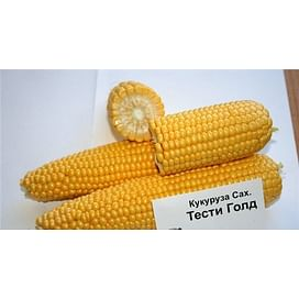 Тести Голд F1 семена кукурузы суперсладкой ранней Agri Saaten