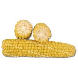 1708 F1 семена кукурузы суперсладкой среднеспелой 2 500 семян Lark Seeds/Ларк Сидс