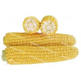 1707 F1 семена кукурузы суперсладкой ранний 2 500 Lark Seeds/Ларк Сидс