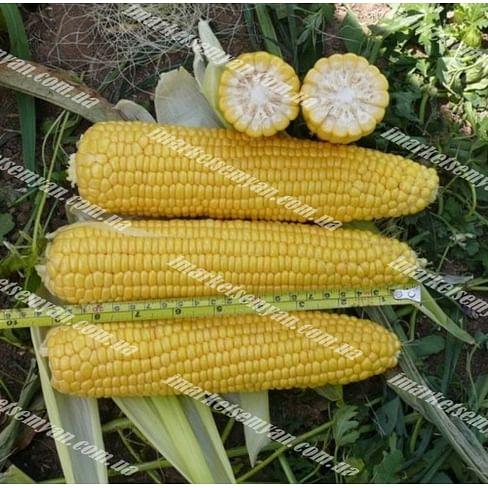 Добрыня F1 семена кукурузы суперсладкой Lark Seeds/Ларк Сидс