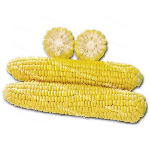 1010 F1 новинка семена кукурузы 2 500 семян Lark Seeds/Ларк Сидс