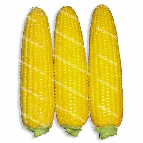 Свит Парадайз F1 семена кукурузы 25 000 семян Lark Seeds/Ларк Сидс