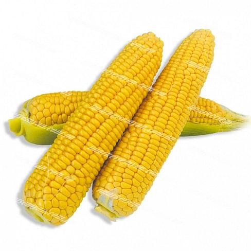 Хаммер F1 семена кукурузы 25 000 семян Lark Seeds/Ларк Сидс