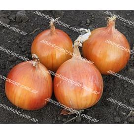 Флагман F1 семена лука репчатого среднего 250 000 семян LibraSeeds