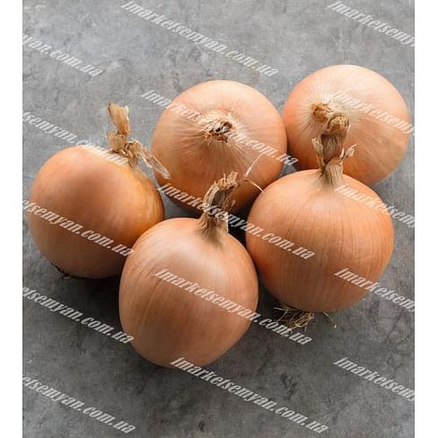 Тамара F1 семена лука репчатого среднего Bejo/Бейо