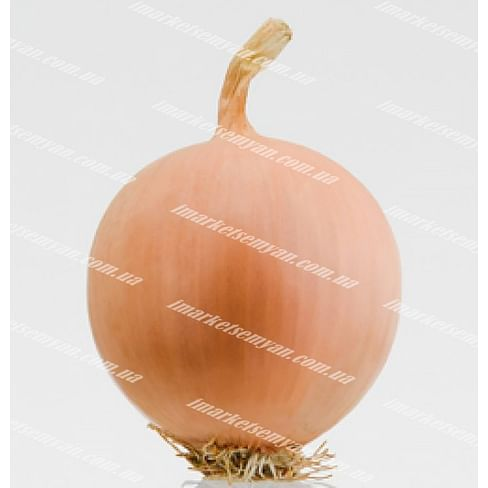 Песо F1 семена лука репчатого среднего 250 000 семян Bejo/Бейо