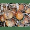 Леон семена лука репчатого среднего 250 000 семян Bejo/Бейо
