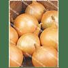 Семена лука репчатого Робот (Райнсбургер 5) 100 грамм PPZ Seeds