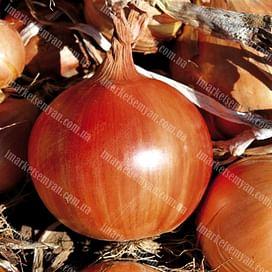 Легаси семена лука репчатого 250 000 семян LibraSeeds