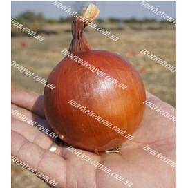 Голд Стар семена лука репчатого 250 000 семян LibraSeeds