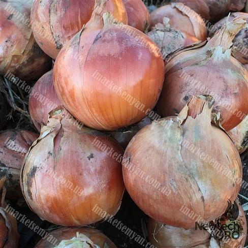 Титан F1 семена лука репчатого 250 000 семян LibraSeeds