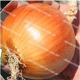 Амадеус F1 семена лука репчатого среднего 250 000 семян Agri Saaten