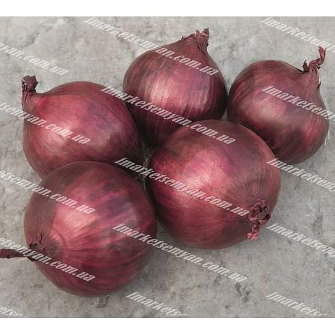 Ред Рум F1 семена лука репчатого красного среднего Bejo/Бейо