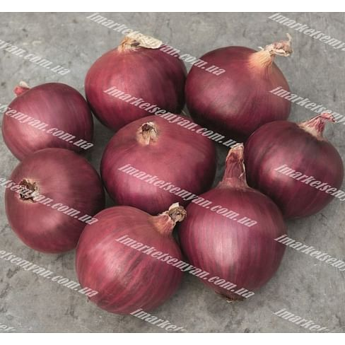 Ред Булл F1 семена лука репчатого среднераннего 250 000 семян Bejo/Бейо